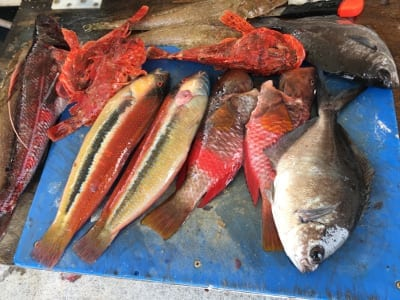 How is this for a great variety of deep sea fish